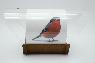 """Авторская кормушка для птиц """"Снегирь 3D"""""""